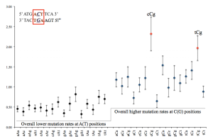 FIGURE 3:Taken from Figure 5 Zhu et al. 2014. Mutation rate of particular GC pairs depends on neighboring sites.