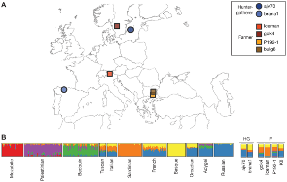 A). The location of the discovery sites of ancient individuals studied, with hunter-gatherers (HG) represented as circles, and farming (F) individuals represented as squares. B). ADMIXTURE results of modern populations on the left panel, and inferred genetic composition of ancient individuals on the right. [Adapted from Figure 1, Sikora et al. 2014.]