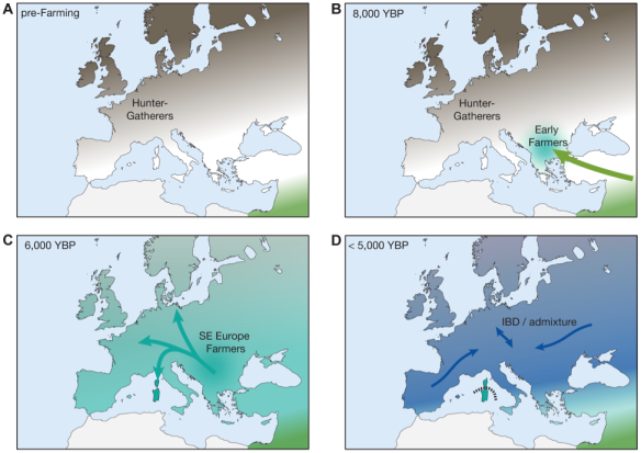 A proposed, highly simplified version of recent European demographic history. A). Early hunter-gatherers (closest to modern day Russian/Basque) were B). heavily influenced by an influx of farmers C) who spread across all of Europe and into Sardinia D). and subsequently maintained only in Sardinia due to genetic isolation. [Adapted from Figure 4, Sikora et al. 2014]
