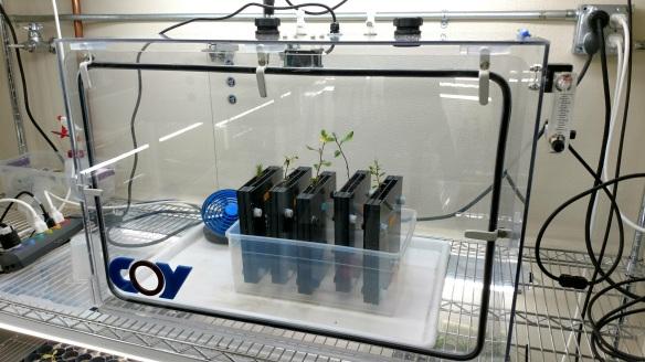 experimental_seedlings